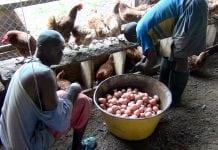 Forte hausse du prix des œufs à Labé (photo d'illustration)