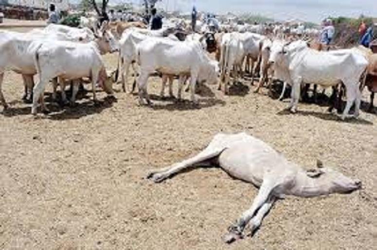 Des animaux meurent à cause de la sécheresse (photo d'illustration)